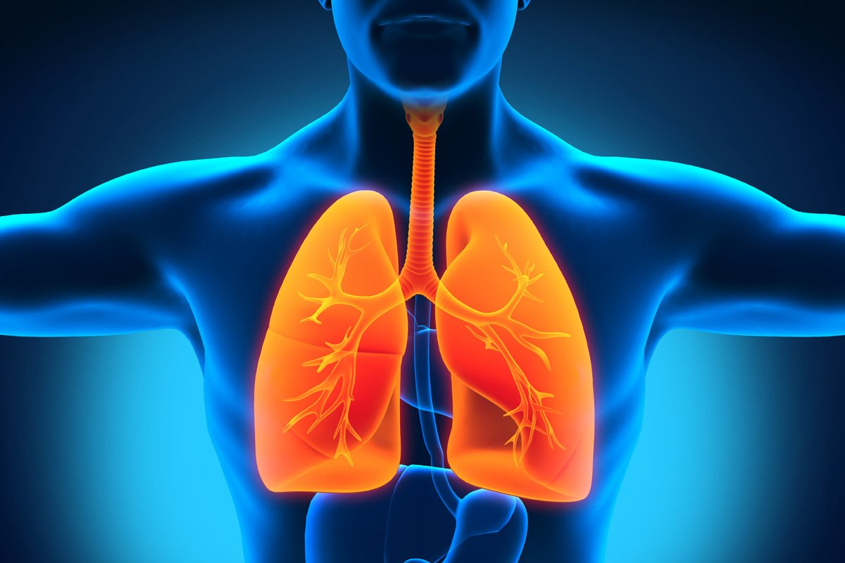 lungs_2