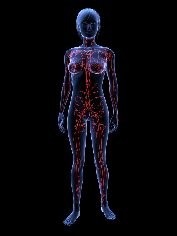 Femal lymphatic system