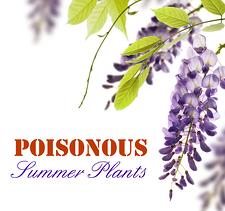 14 Poisonous Plants: Your Summer Guide