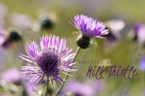 Health Benefits of Milk Thistle Extract.