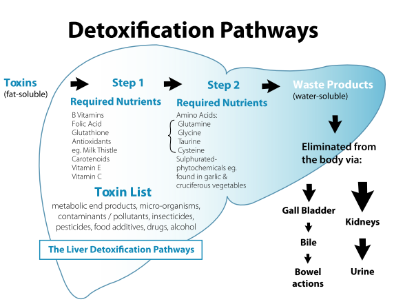 Detoxification_Pathways.png