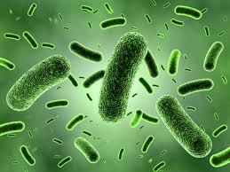 Gut bacteria.jpg