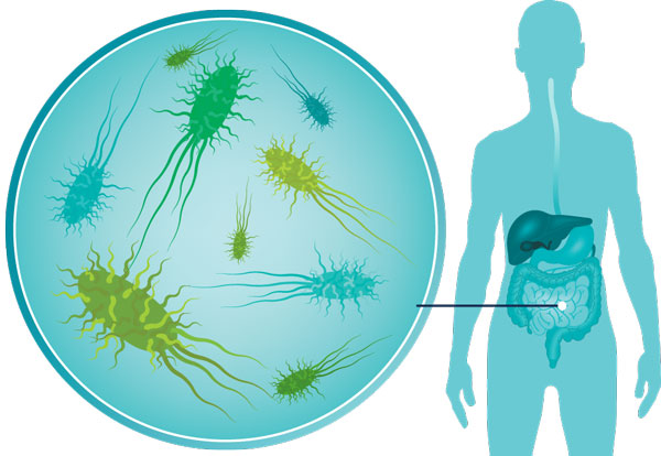 Probiotic dds 1 strain for healthy immunity