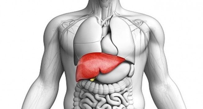 How To Improve Liver Health For Enhanced Vitality & Better Digestion