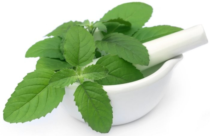 holy basil for adrenal fatigue
