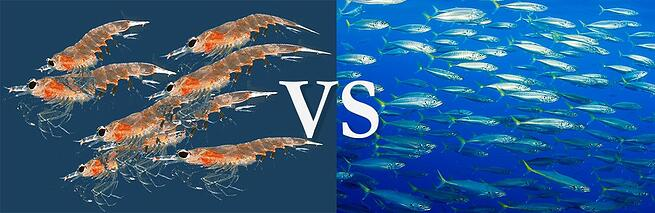 The great debate is krill oil better than omega 3 fish oil for Is krill oil better than fish oil