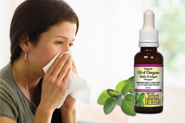 Oil of Oregano Your Secret Weapon This Cold & Flu Season