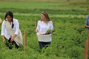 Non-GMO Factors Farms