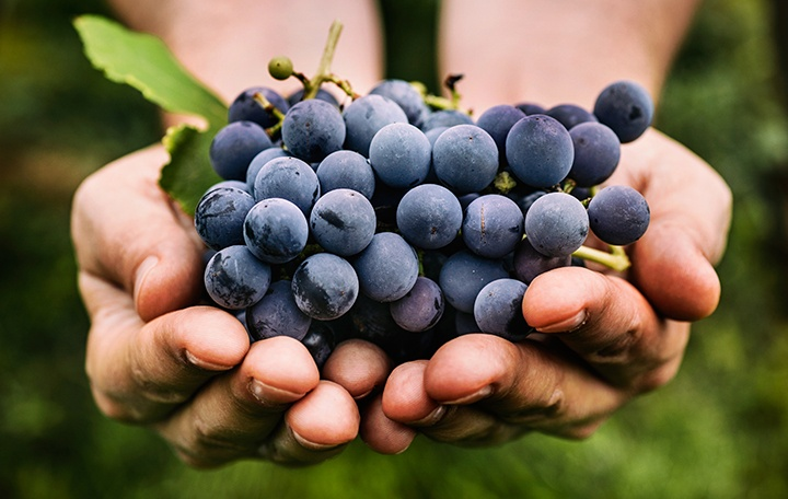 What Are The Health Benefits Of Resveratrol