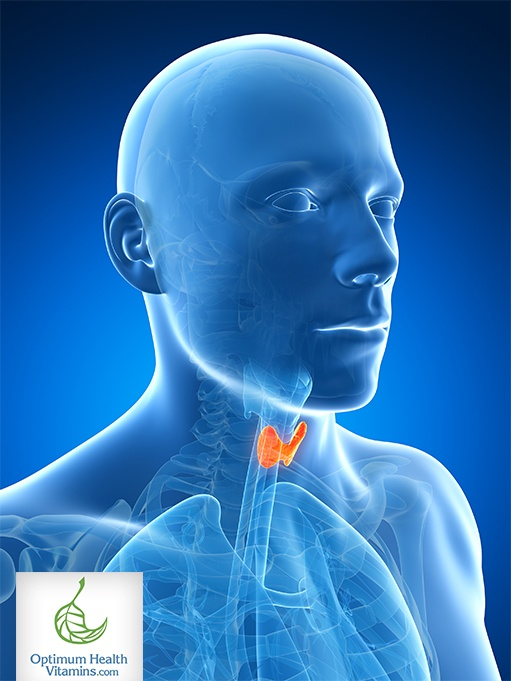 7 Tips For Maintaining Healthy Thyroid Function