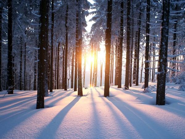 Darker winter months effect mood
