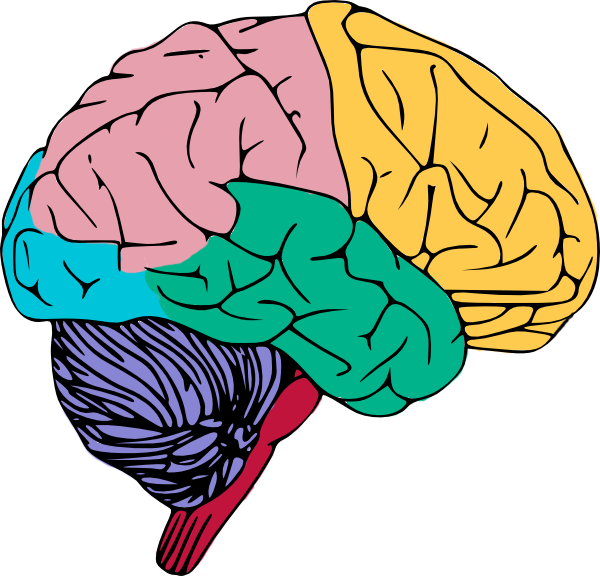 brain inflammation causes
