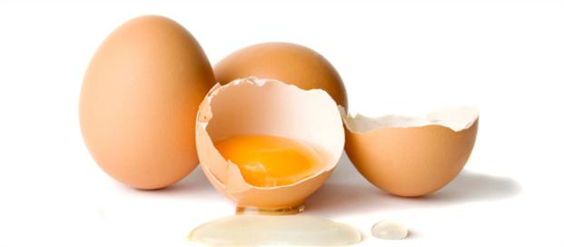 egg white allergy in adults