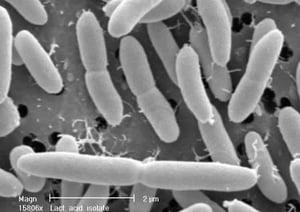 Probiotics containing lactobacillus rhamnosus