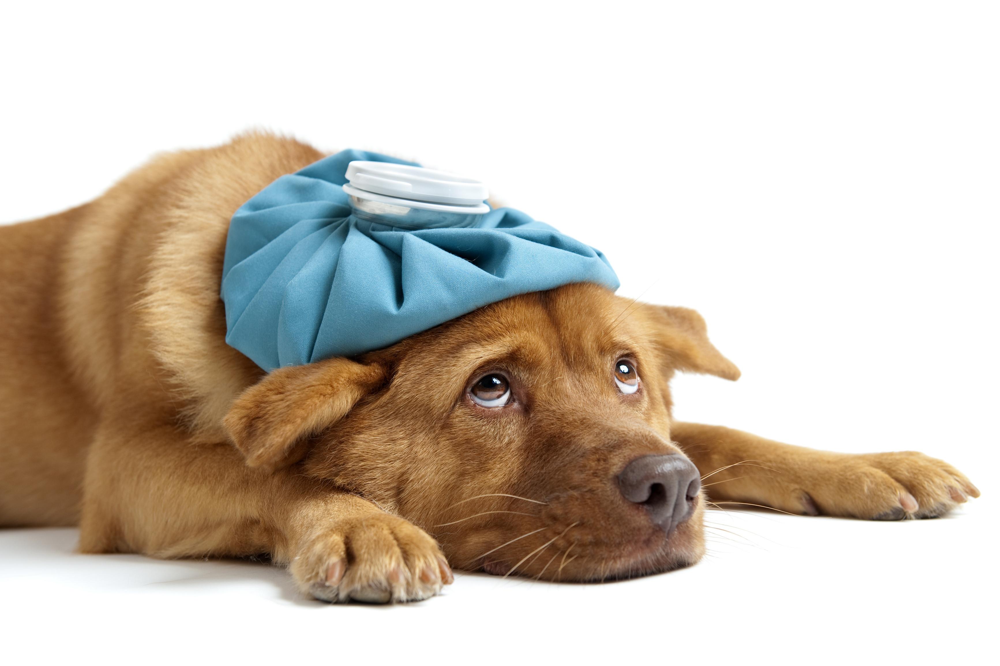 Opti-Immune C&F for Colds & Flu