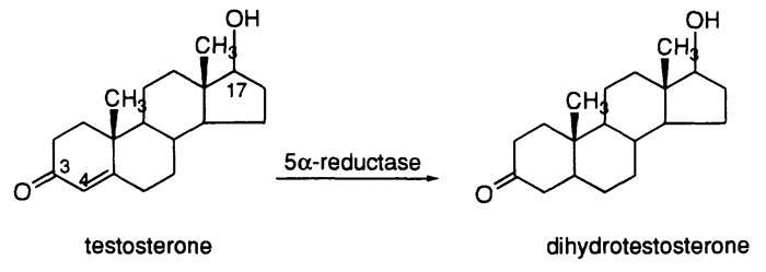 5-alpha-reductase-diagram.jpg